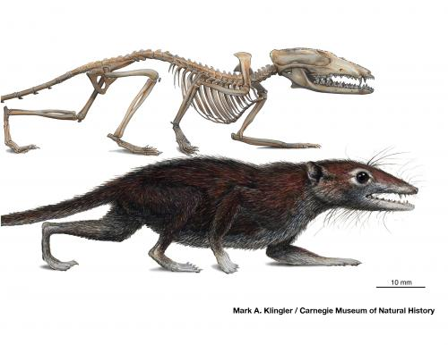 (very) early mammal