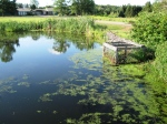 pond by een