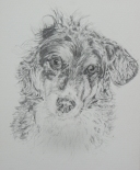 Inside illustration - my old dog Penny, sketch by Isabella Clarke