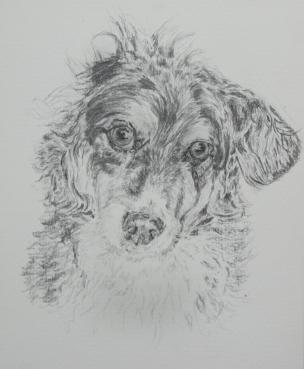 Inside illustration - my old dog Penny, sketch by Isabella Clarke