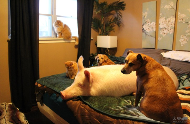 Esther the Pig & Siblings