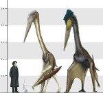 https://upload.wikimedia.org/wikipedia/commons/7/7a/Arambourgiania%2C_Nyctosaurus_and_Quetzalcoatlus_scale.jpg